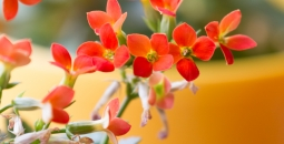 Dębowy Park pełen jest kwitnących roślin